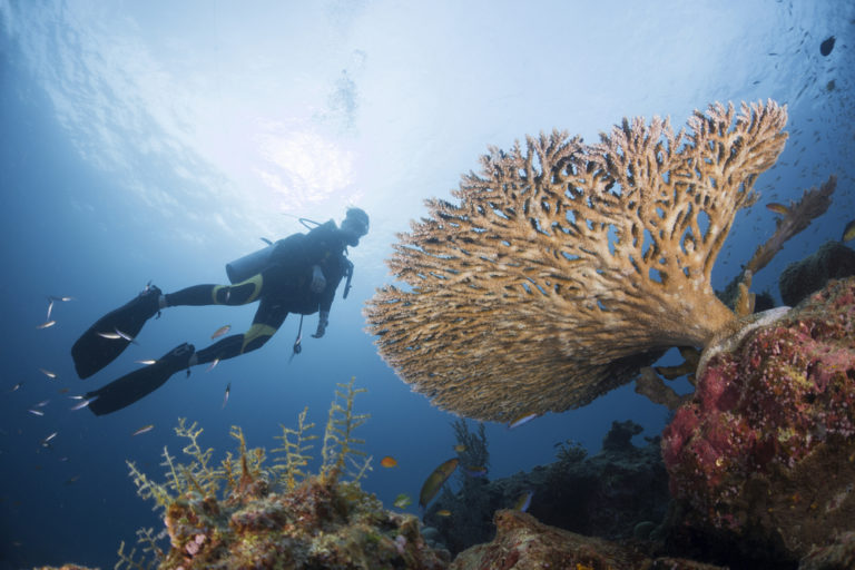 oktavia liveaboard has some of the best diving in thailand