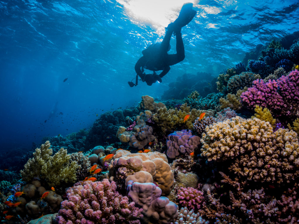 scuba diver over colourful coral reef in the red sea.